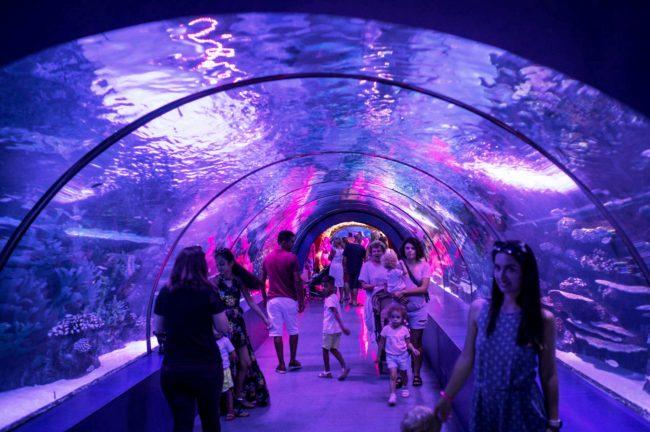 Aquarium to replace former Lord & Taylor store at Galleria Mall